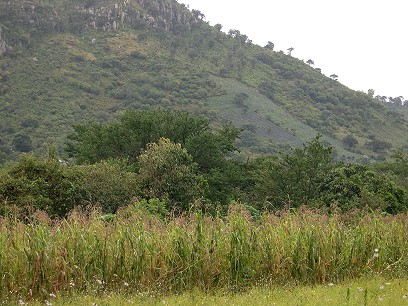 The family's garden is at the foot of the hills.  The blue-green patch on the hill is agave, destined to become tequila.