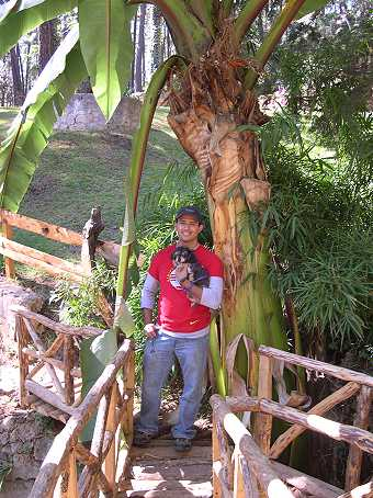 They are standing under a beautiful plant in the banana family.  Log bridges add an alpine air.