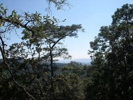 On very clear days you can see all the way to the Paracutin volcano in Michoacan from this spot.  A perfect place to hunt orchids!