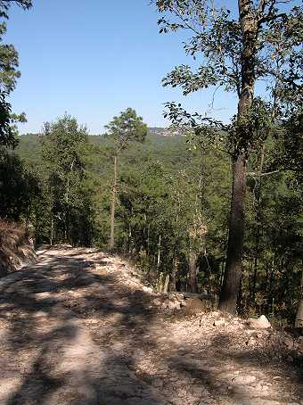 Dirt roads wind through high oak and pine forests, often leading to incredible views.