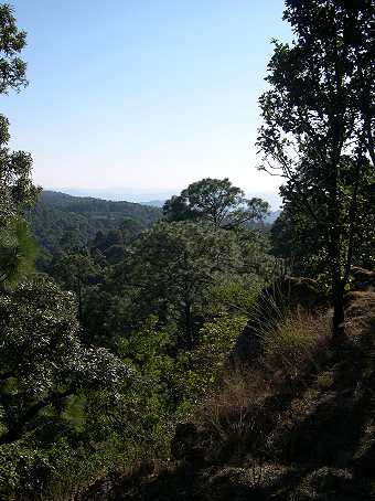 Mazamitla is in the Sierra del Tigre Mountains, where mountain lions roam the cool forests and orchids, bromeliads, and insectivorous piguiculas abound.