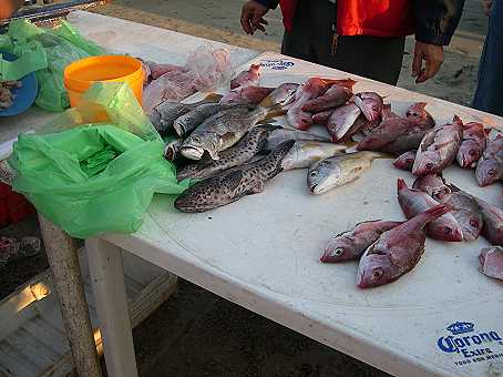 You never know what you will find--Huachinango (Red Snapper) or fish with spots...